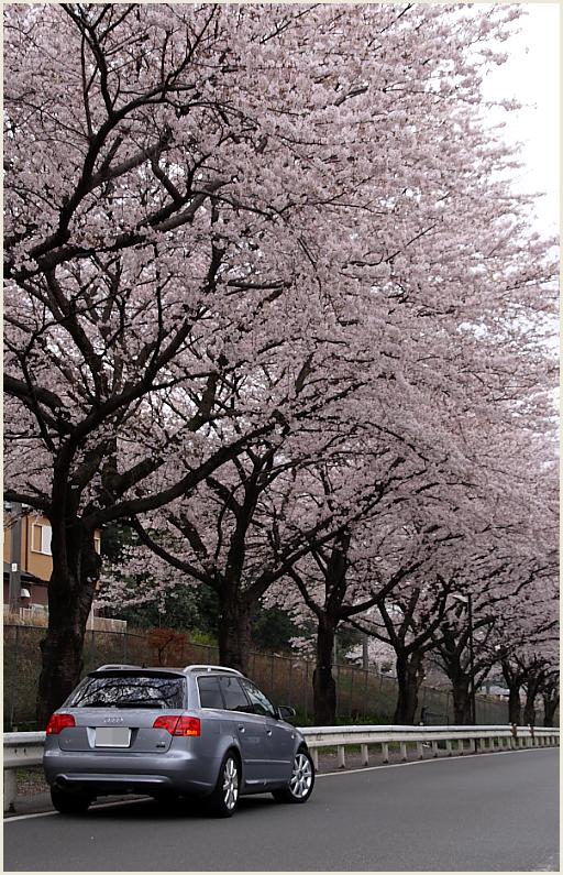 001_桜と愛車シリーズ.jpg
