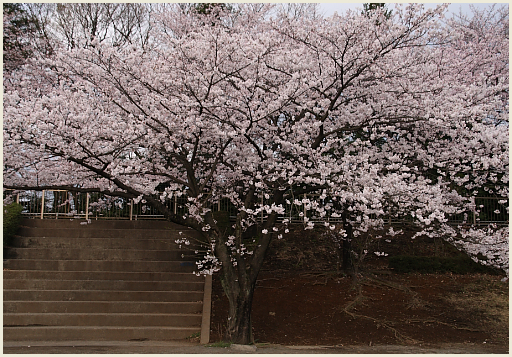 02_桜公園.jpg