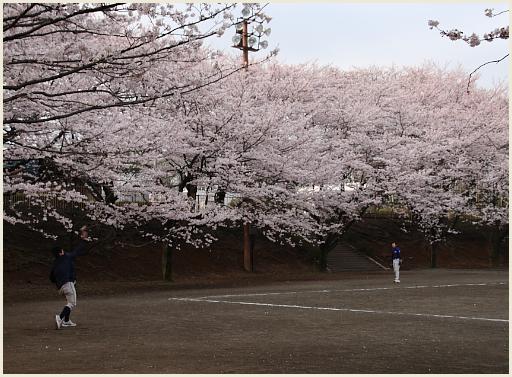 03_桜公園.jpg