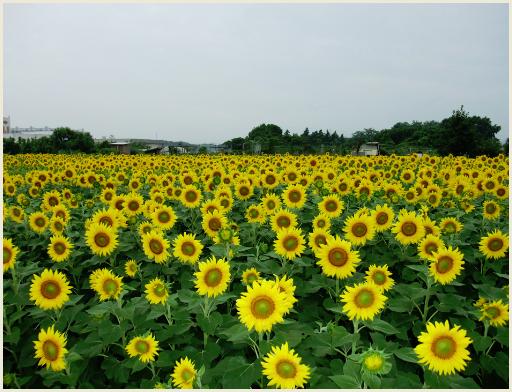 04_夏休み.jpg