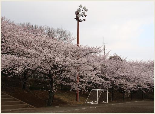 04_桜公園.jpg